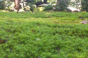 mossy places_prevent moss